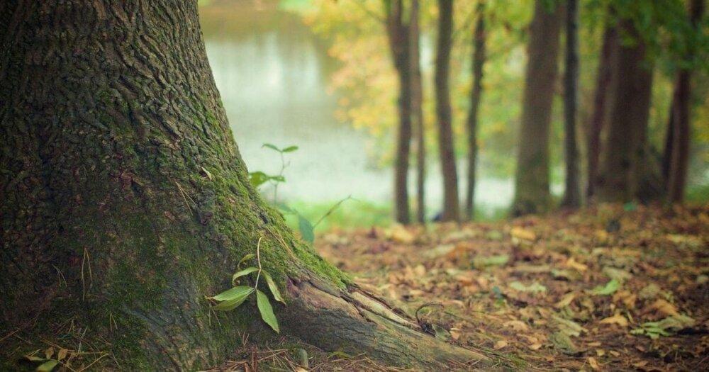 劉備と木登り
