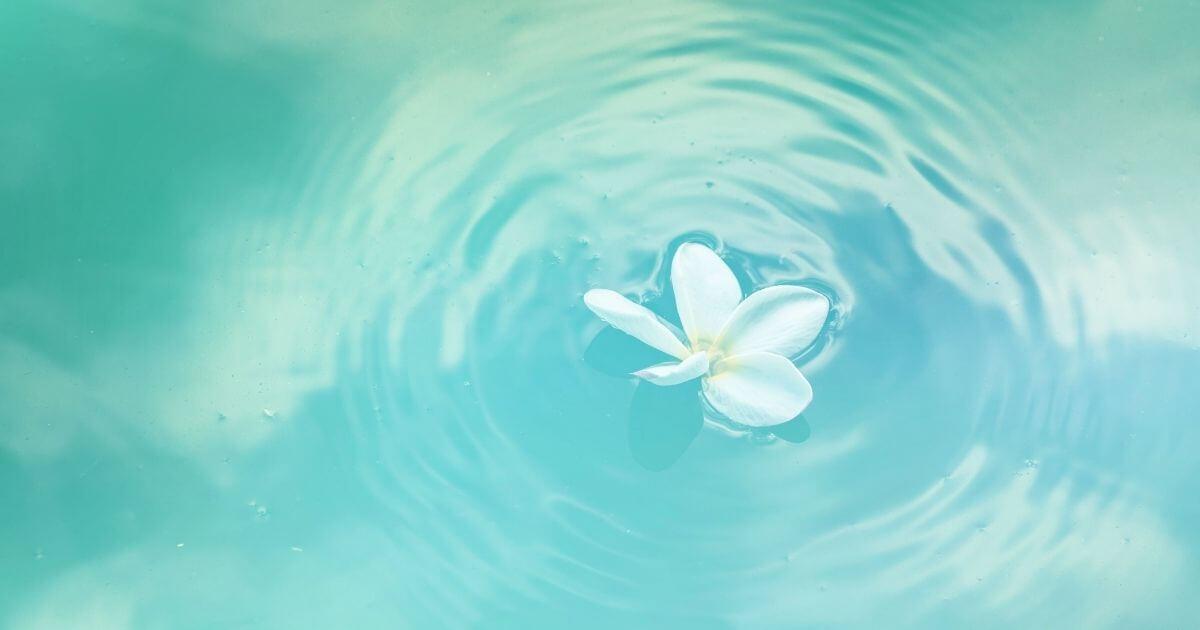 浮く花びら