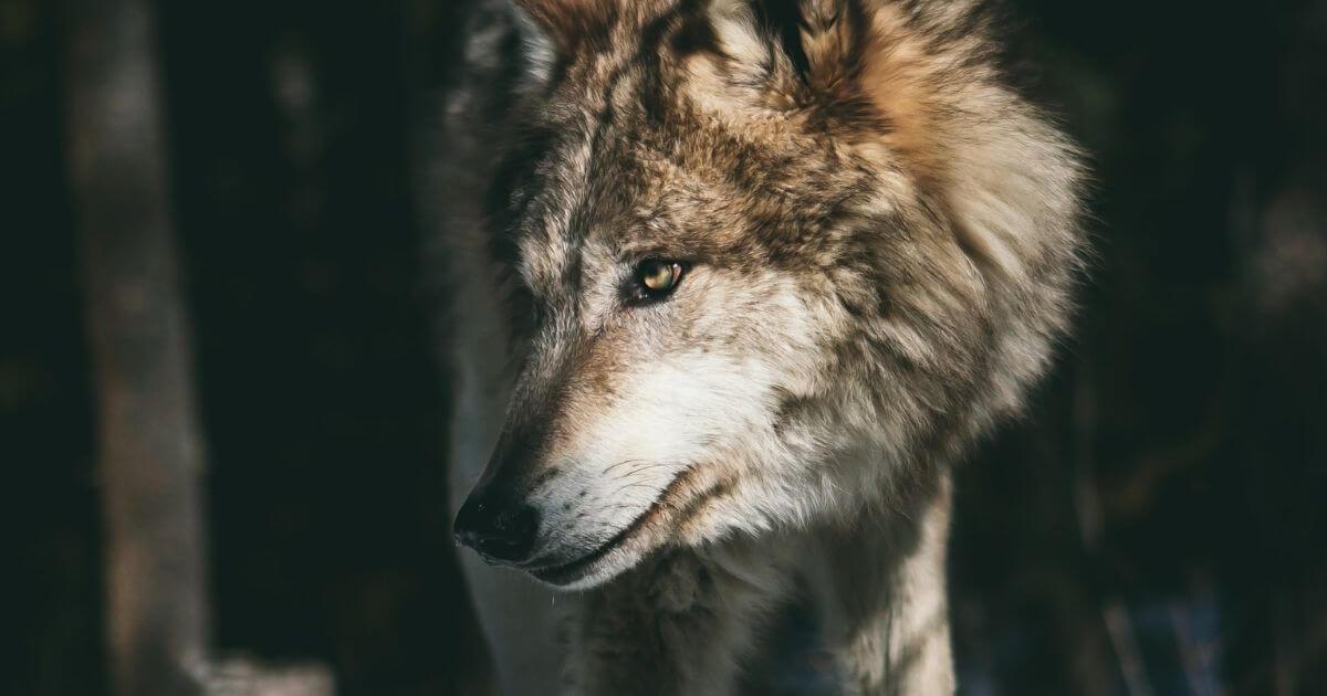 虎狼の董卓