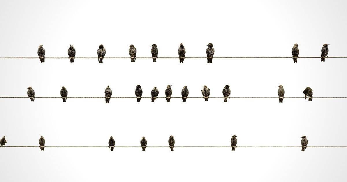 電線に並んでとまる鳩たち
