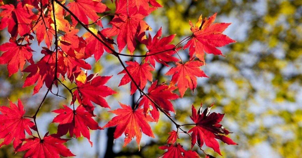 紅葉の近影