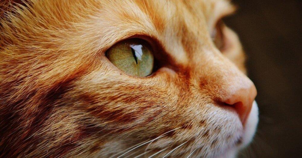 目が大きいネコ